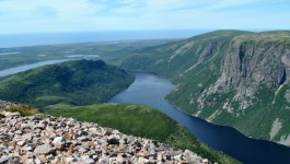 Three Moose and a Mountain | Hiking Gros Morne, Newfoundland
