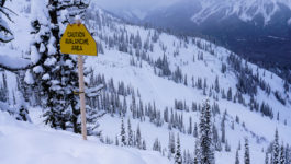 Shredding Powder in Fernie, BC