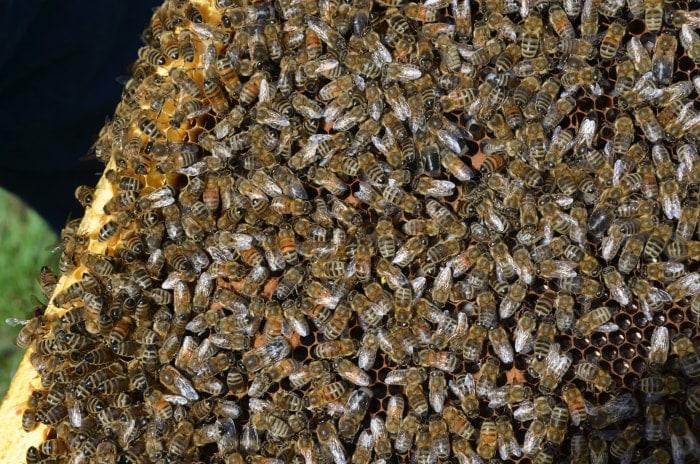 Bee Farm Alberta