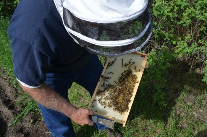 Bee Farm Wainwright