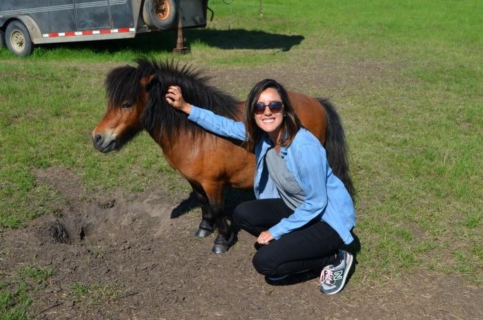 Wainwright Pony