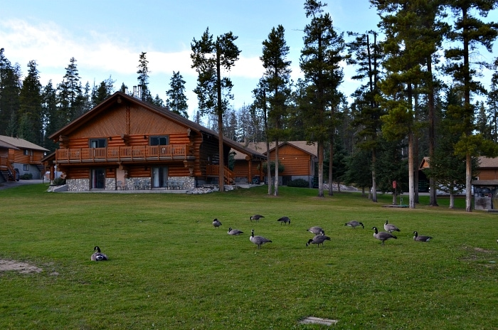 Best accommodation jasper alberta
