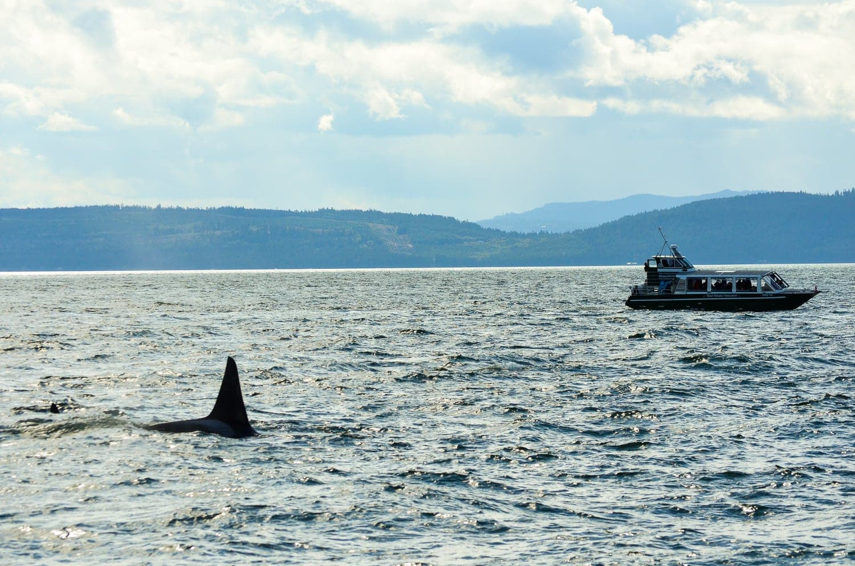 Tour para ver orcas en Vancouver, Canadá