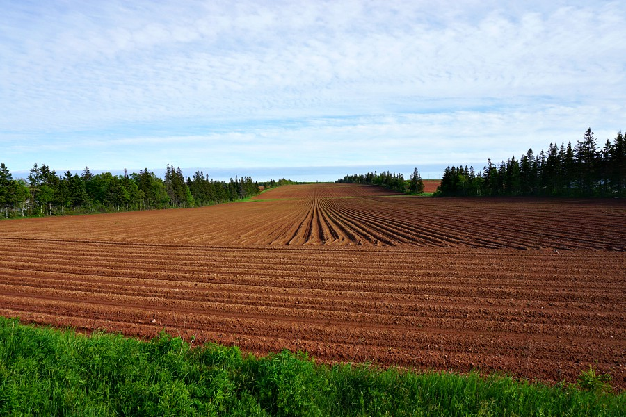 PEI potato fields
