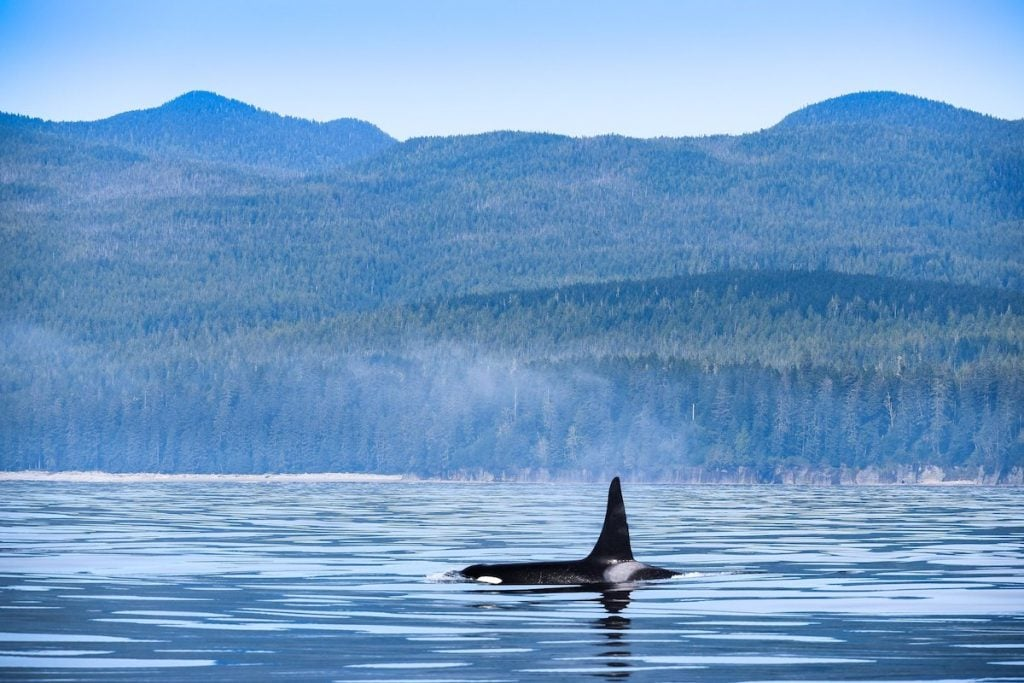 Whale Watching Vancouver Island Port Renfrew Canada