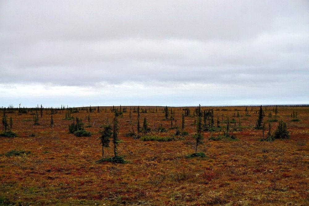 arctic treeline driving to the arctic
