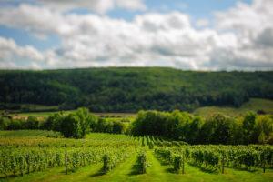 Canadian wine