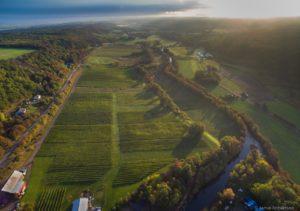 Nova Scotia Wineries