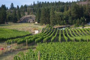 Best Okanagan Wineries