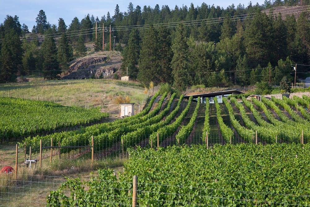 Best Okanagan Wineries