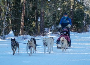 dog sledding saskatchewan