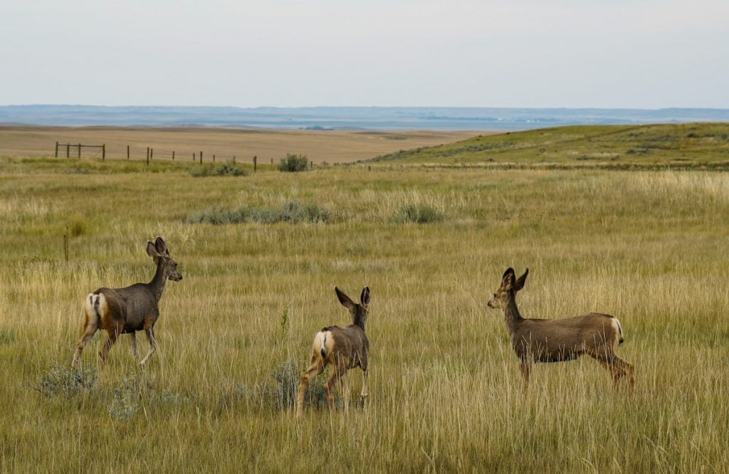 Grasslands National Park Wildlife