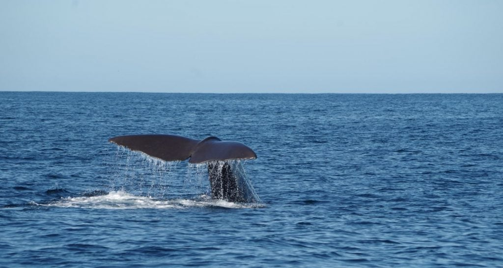 Whale Watching Tadoussac 1024x546
