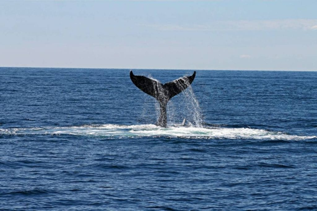 Whale Watching 2 1024x683