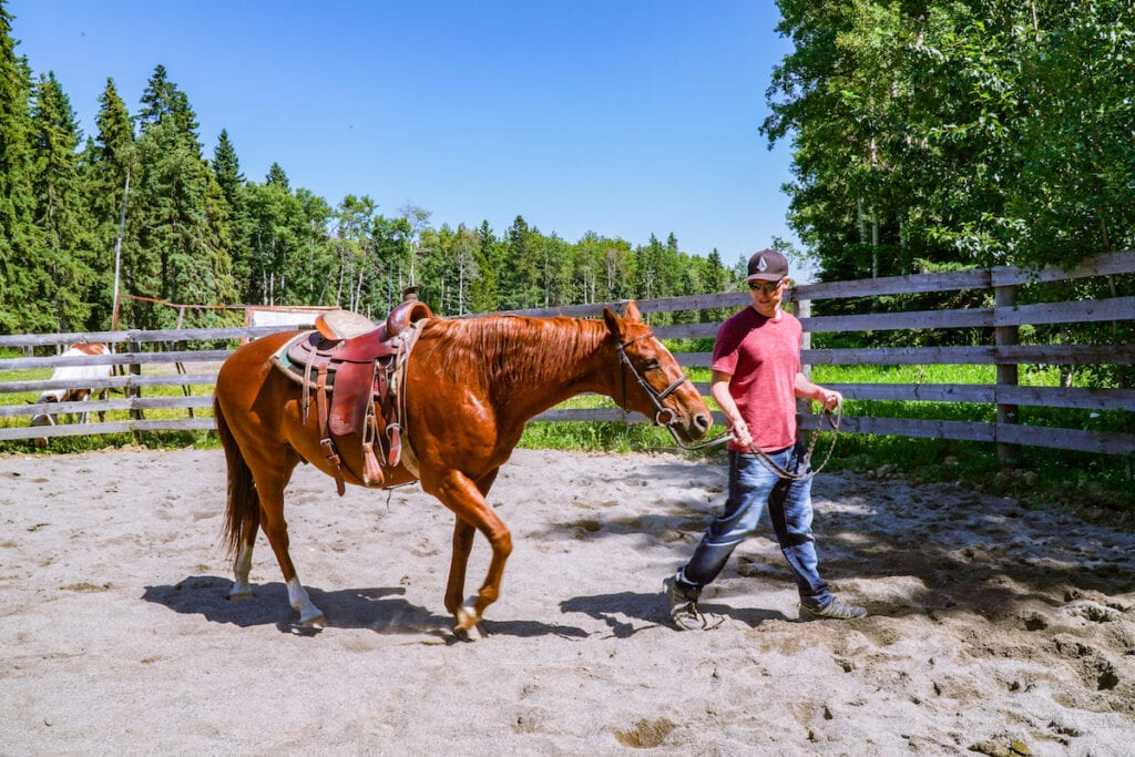 Walking my horse at Painted Warrors Indigenous Tourism experience, Alberta