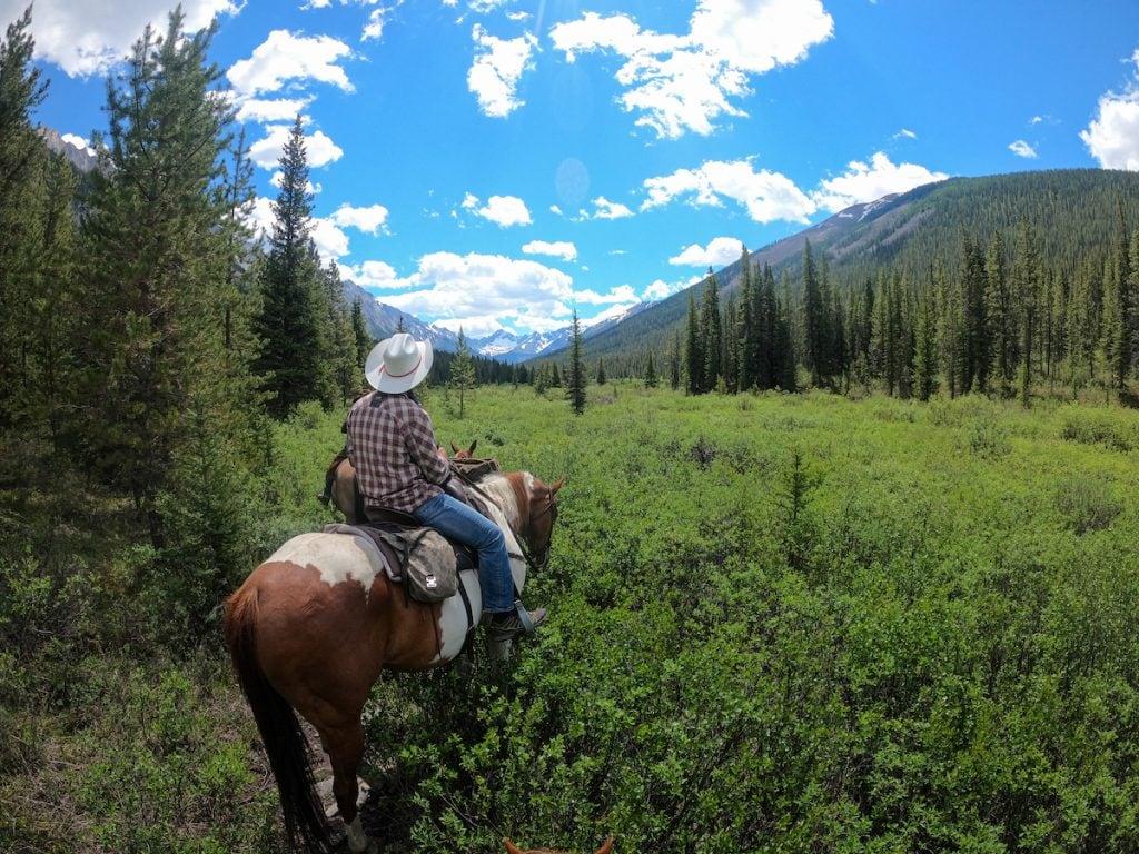Banff horseback rides into the backcountry.
