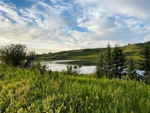 Cypress Hills Alberta