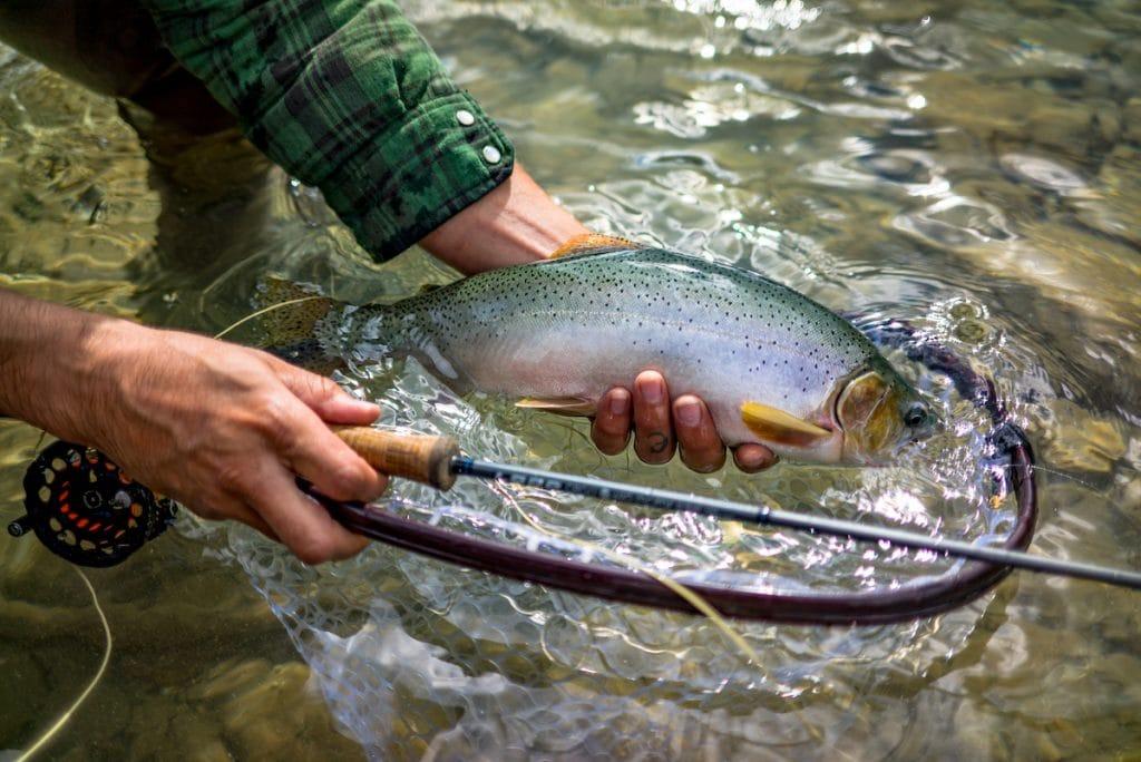 fishing in alberta