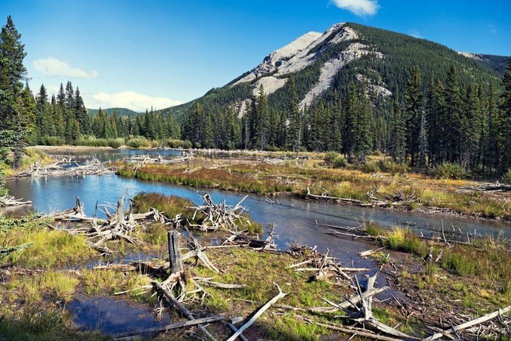 Kananaskis Bragg Creek 1024x683